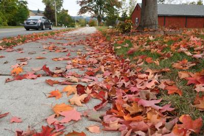 Leaf drop