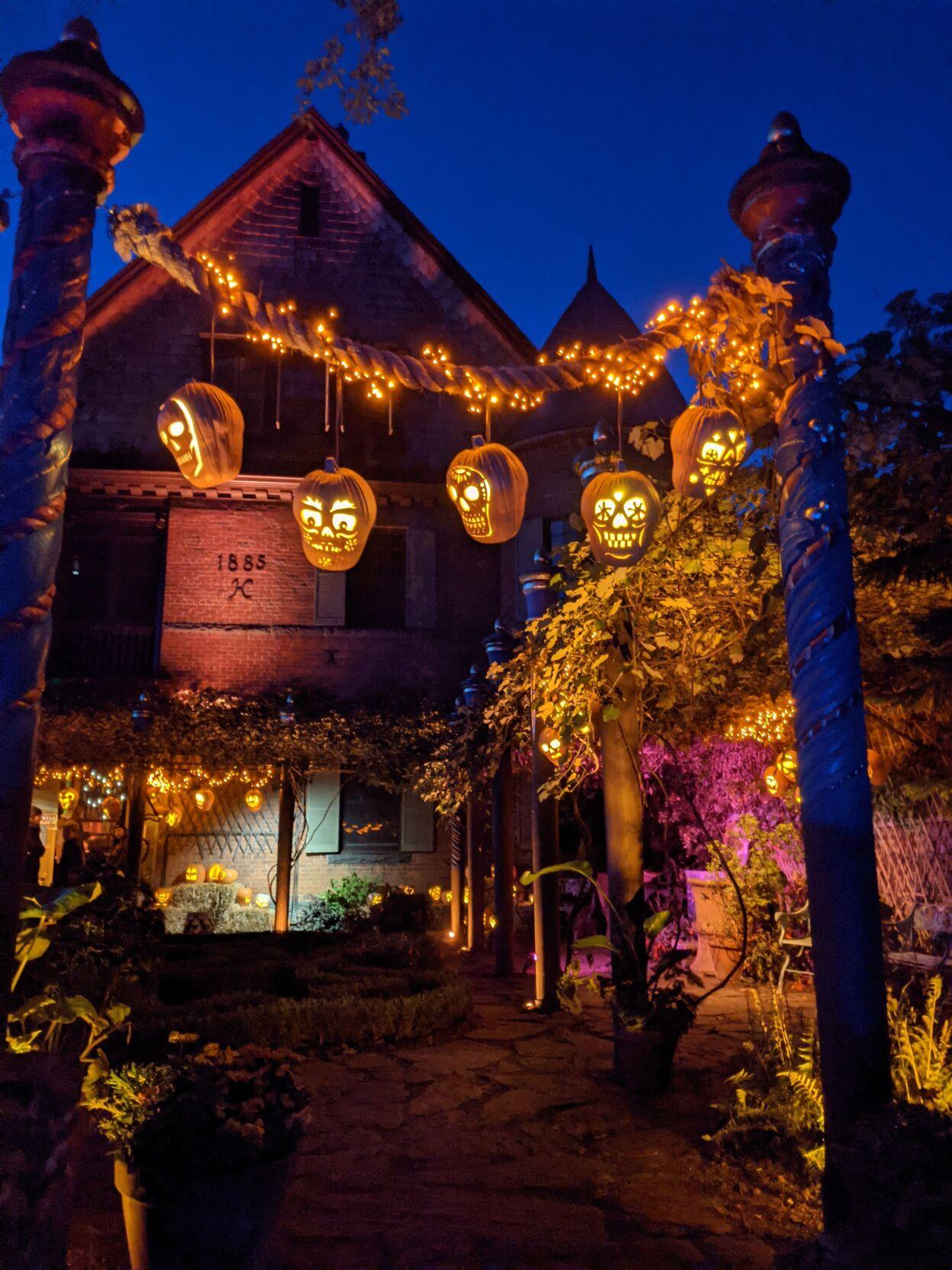 Pumpkins hang from trellis
