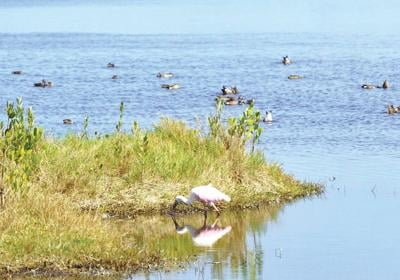 Ruth Bass: Birdwatching provides respite from day's news