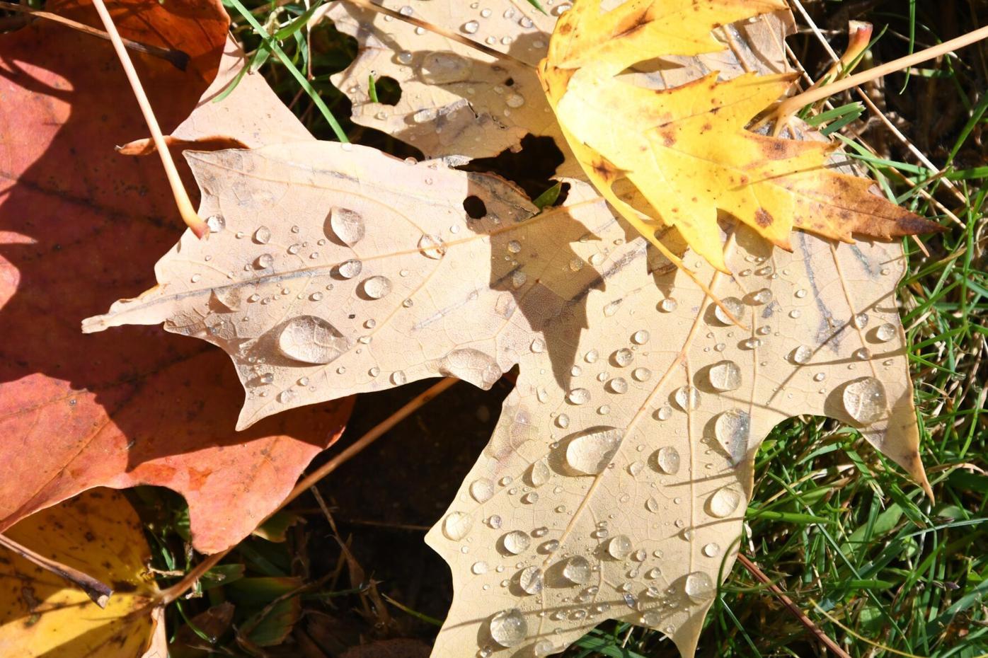 Weather outlook leaf