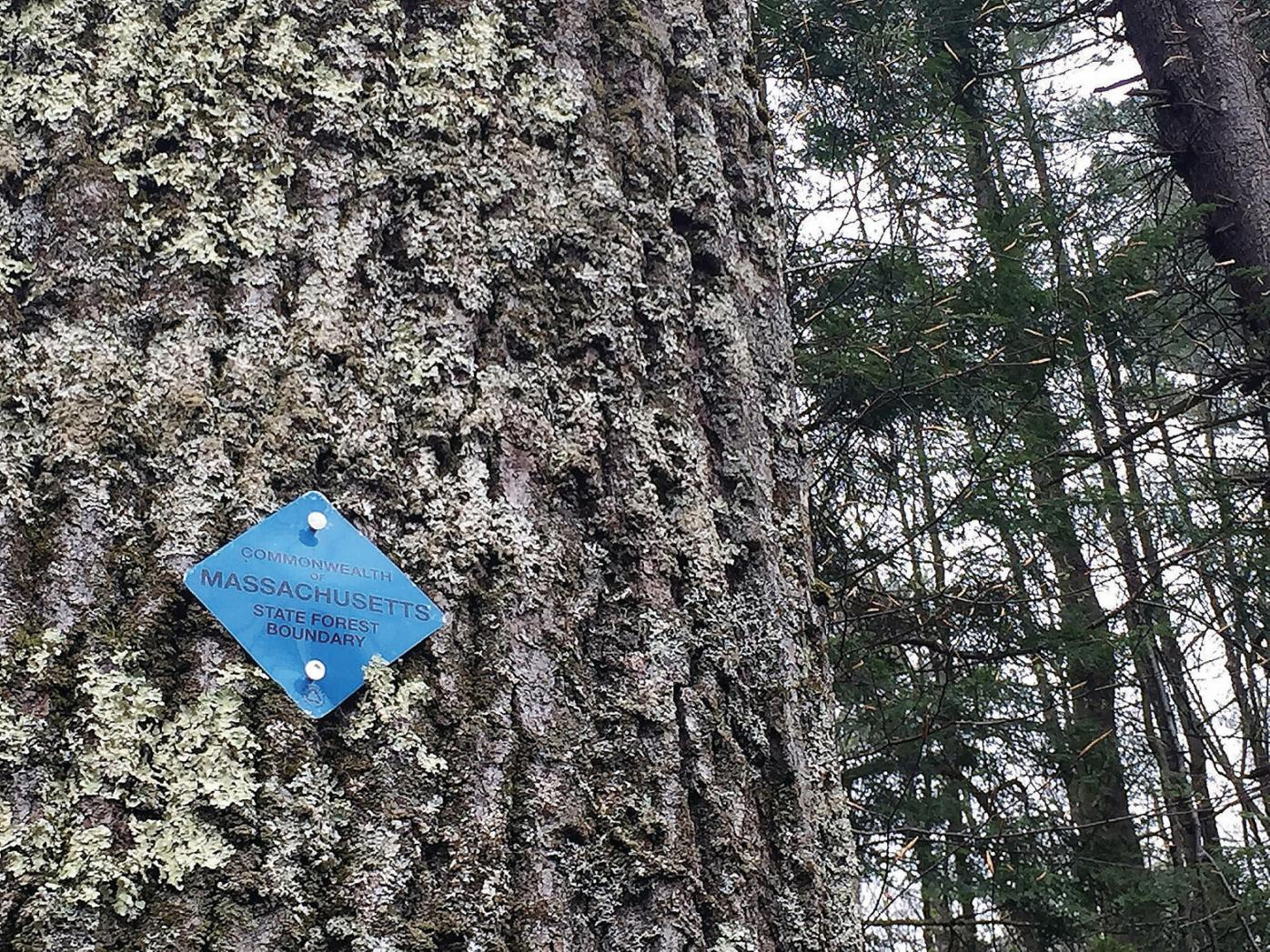 FERC still silent as Otis State Forest tree cutting begins for pipeline, but questions remain