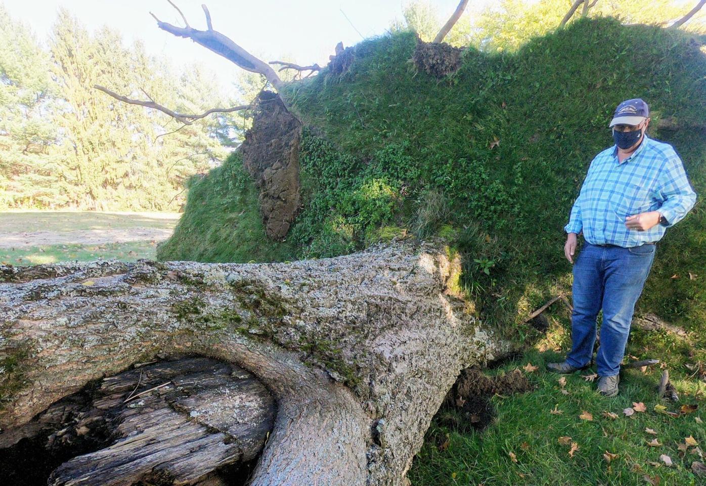 Tugaw Oak