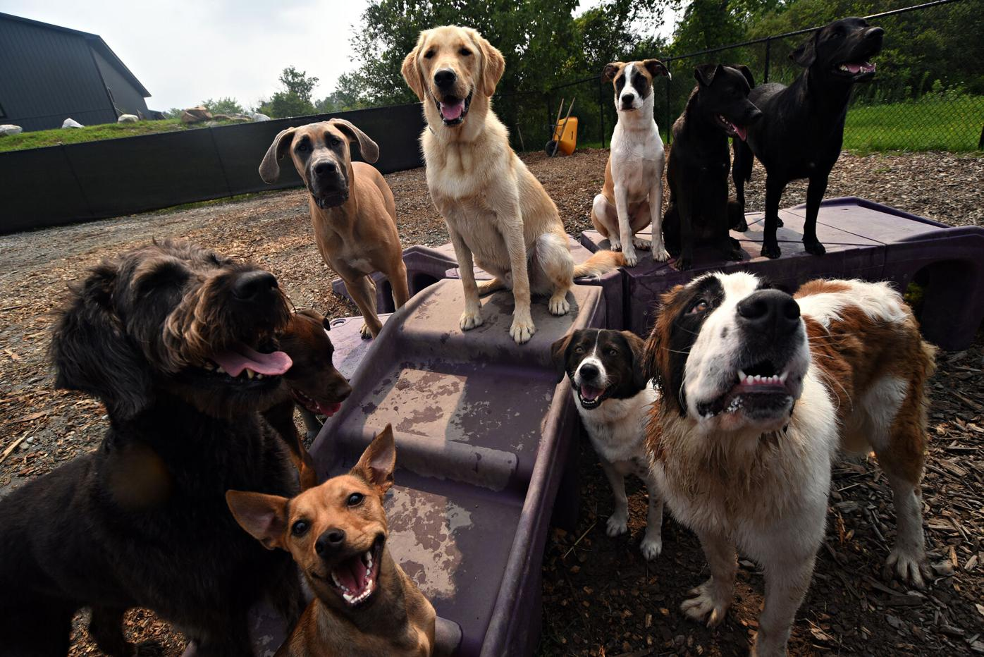 Ten dogs pose in an outdoor play yard around a purple climbing structure