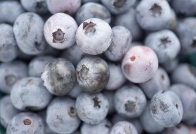 Sick of the rain? Get in line, say Berkshires farmers. But the blueberries don't seem to mind