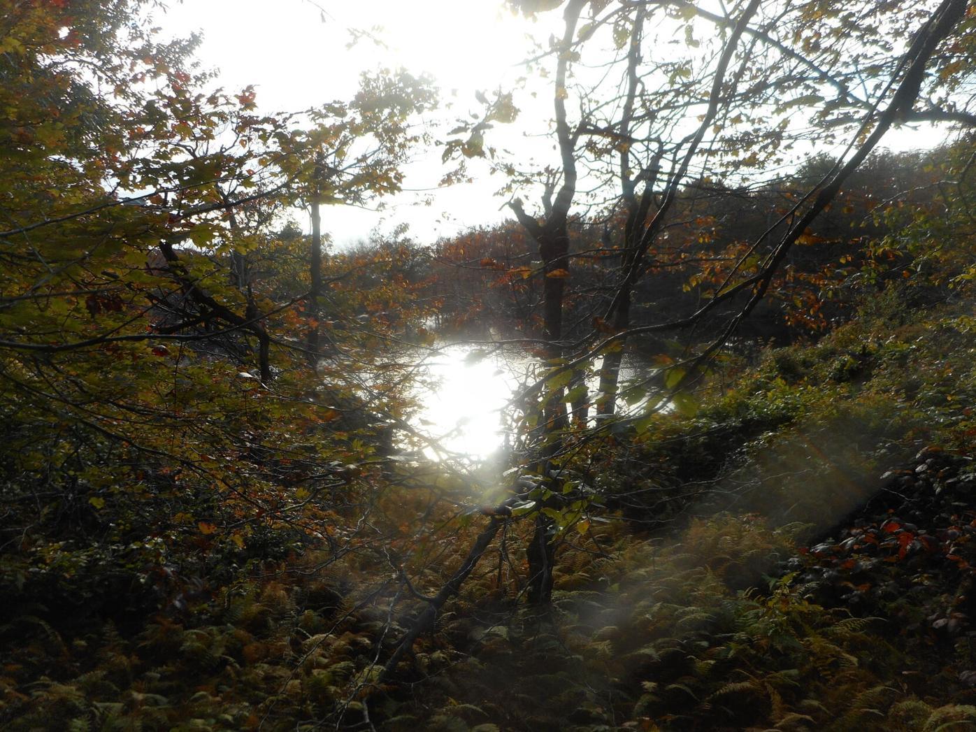 Spruce pond.JPG