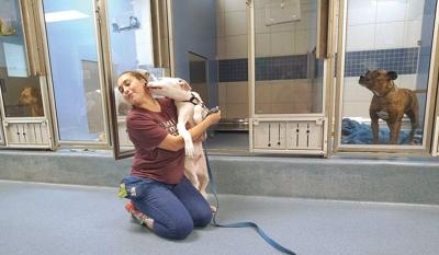 As Dorian threatens US, Berkshires opens its arms to rescued dogs