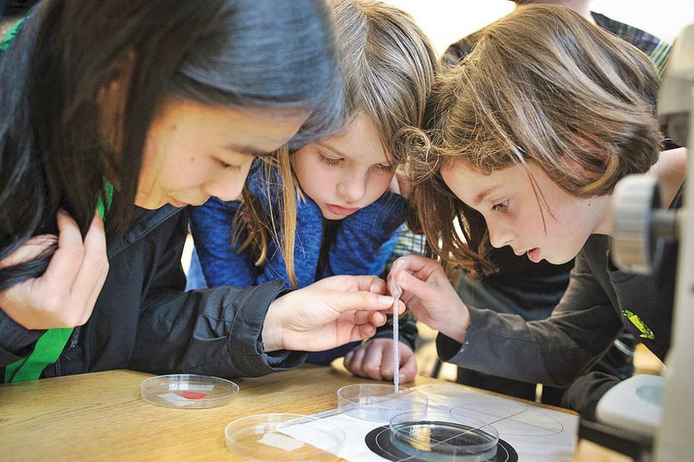 BioEYES program breeds curiosity, enthusiasm for science in Berkshire classrooms