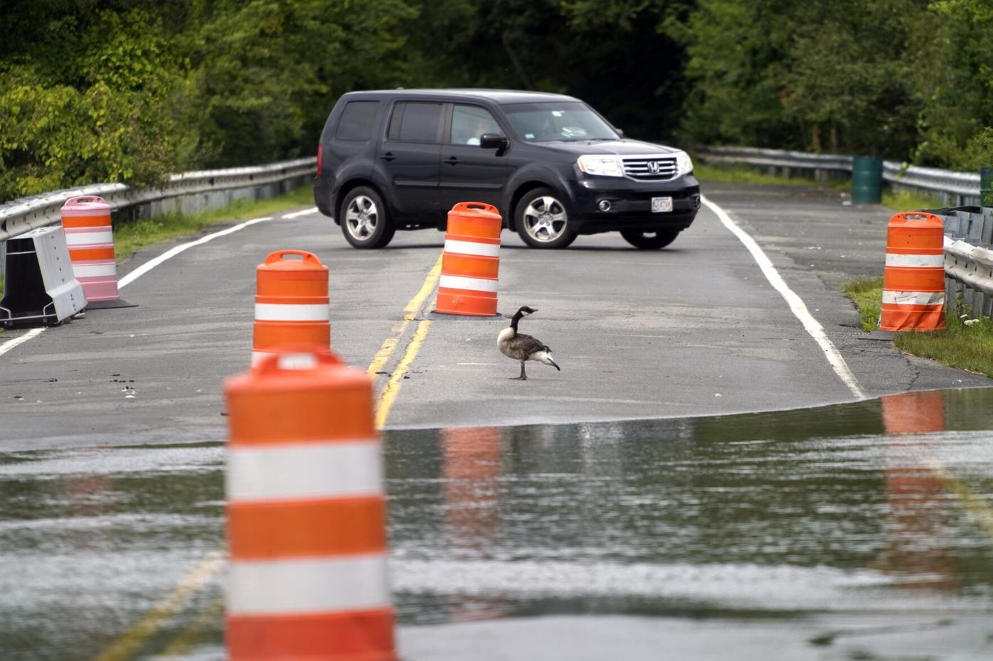 Goose on causeway