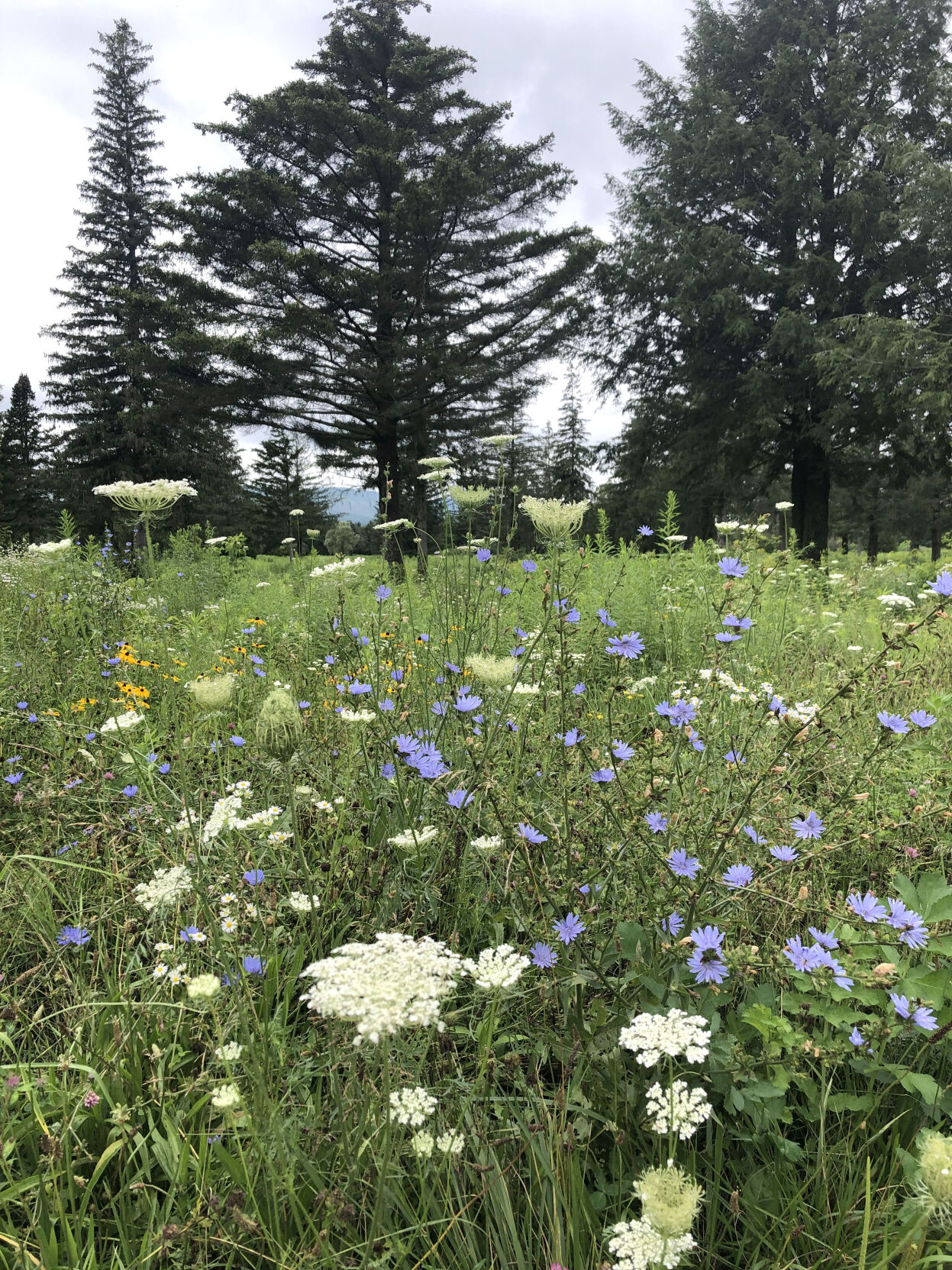 A field of wildflowers (copy)
