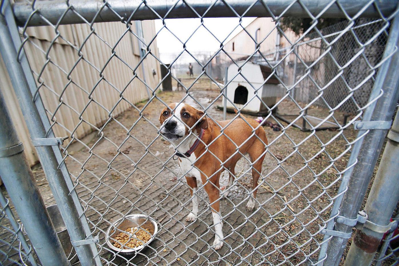 Eleanor Sonsini Animal Shelter staff refuses to leave