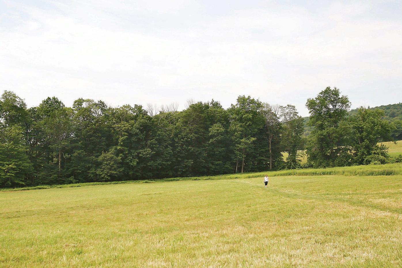 Hollow Fields vista