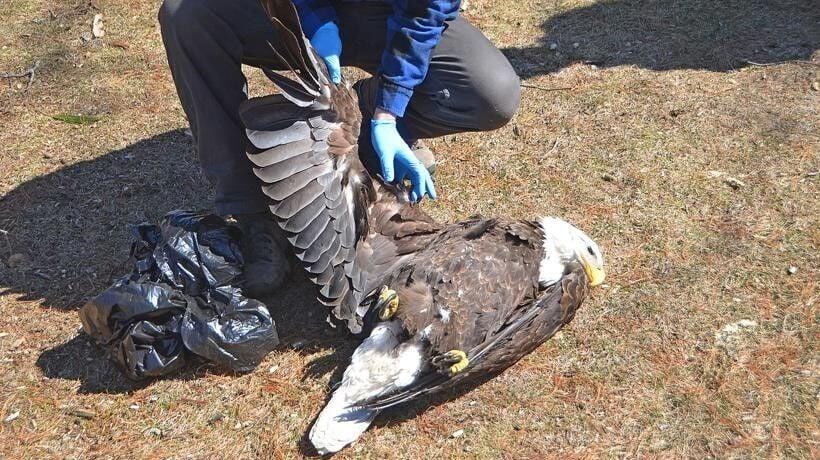 dead eagle, 2021.jpg
