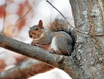 Take Me Outside: Squirrels act as arboreal acrobats
