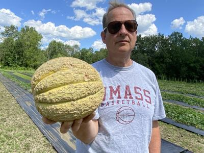 David Leavitt, known as the melon whisperer, in the field he leases in Cheshire.