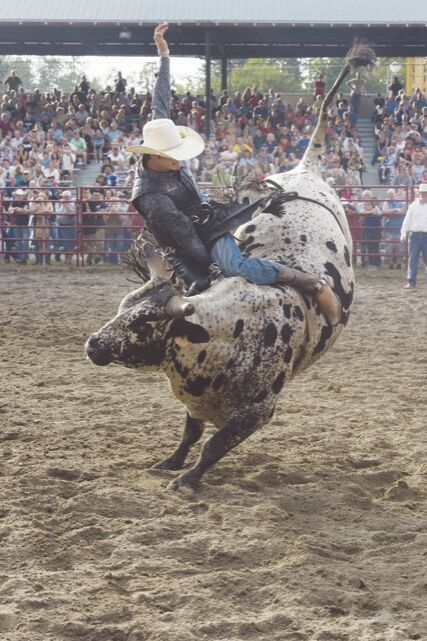 Man rides bull