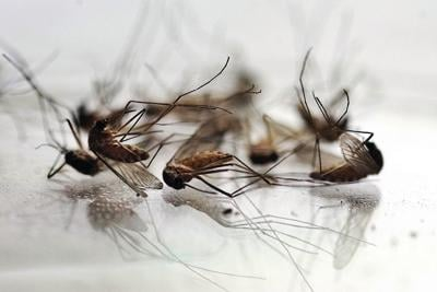 Pittsfield eliminates mosquito spray upon request, closes books on fiscal year