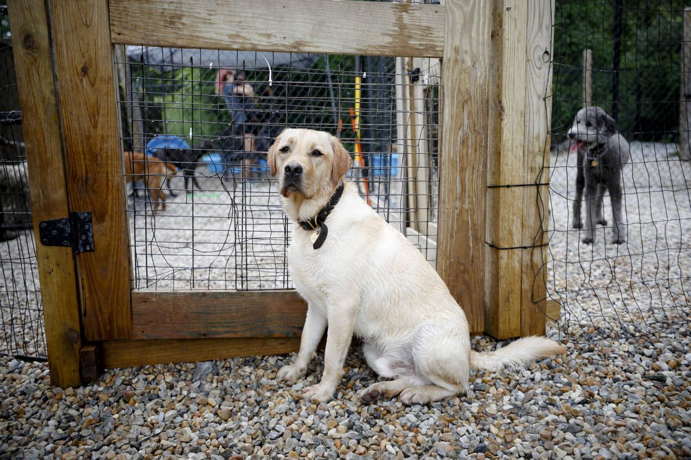 dog sits at gate outside