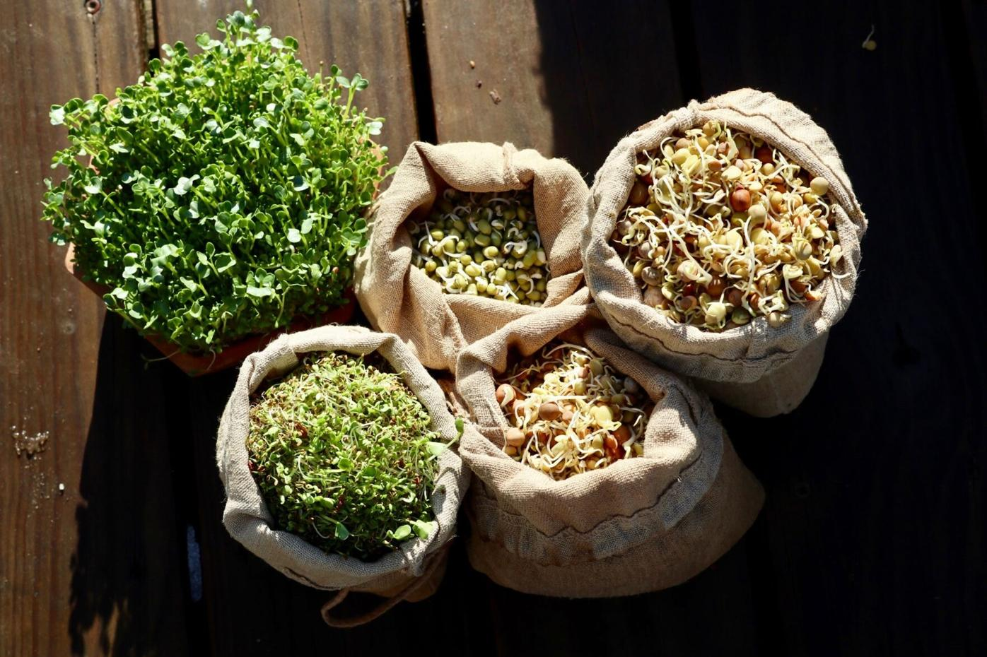 SproutBag-Salads