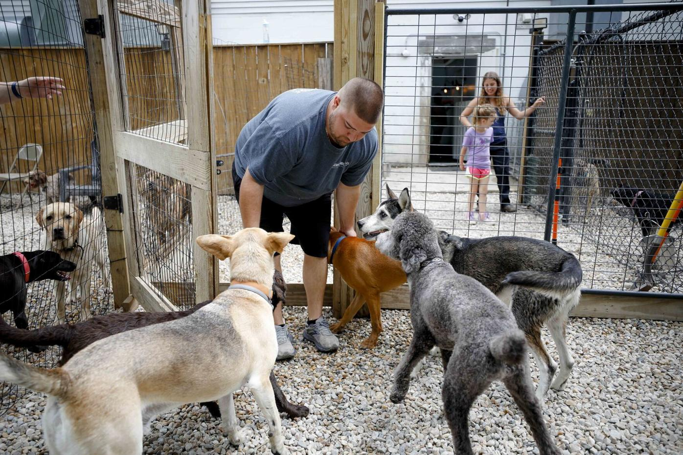 man is surrounded by dogs