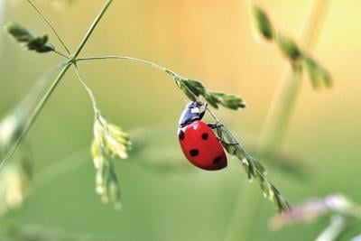 Let the bugs help you in the garden