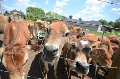 Lee: Dairy farm hosting open house