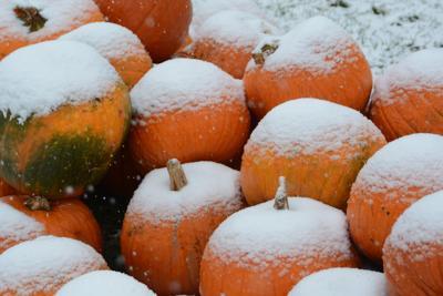 Pumpkin snow