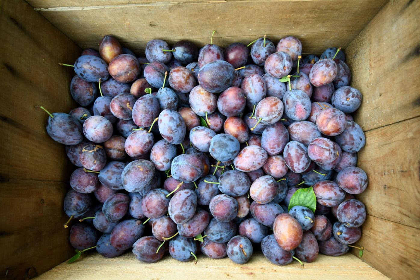 A wooden box of plums