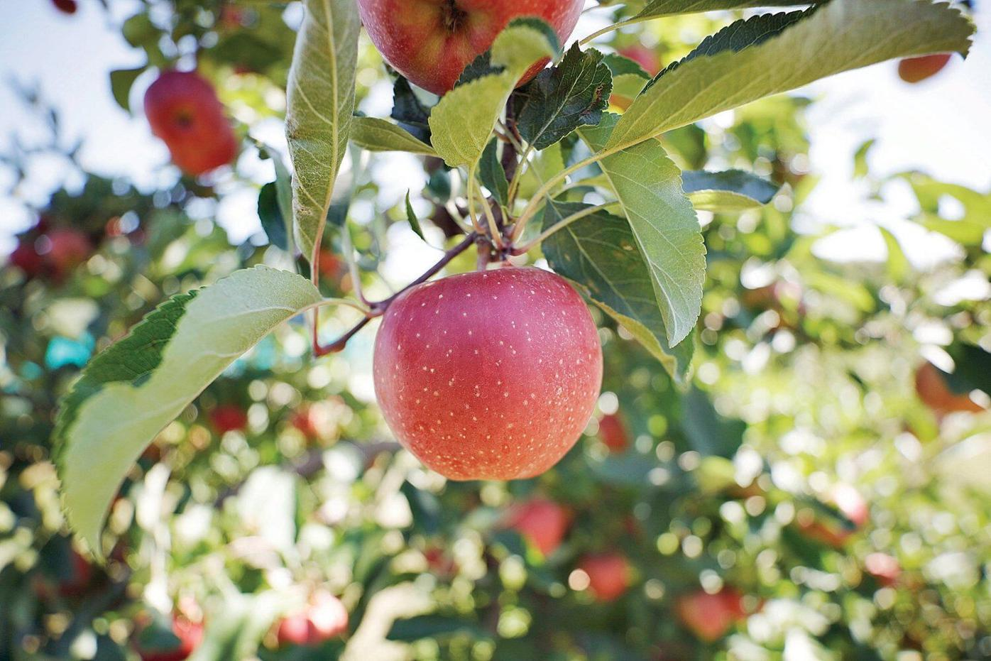 It's pick-your-own season, with new protocols