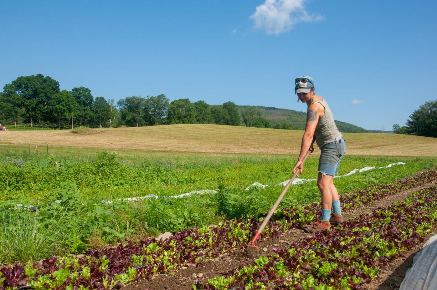 Molly Comstock tends the fields at Colfax Farm.