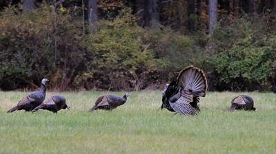 Turkey photo from Gene