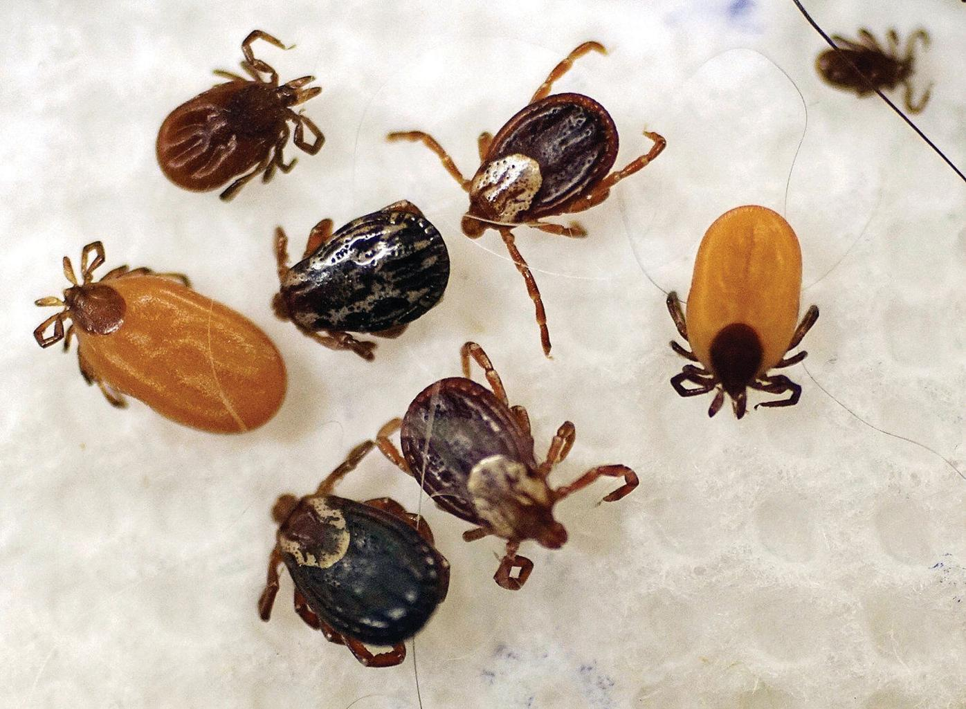 Letter: It's tick season, and take it from a victim: Look out!