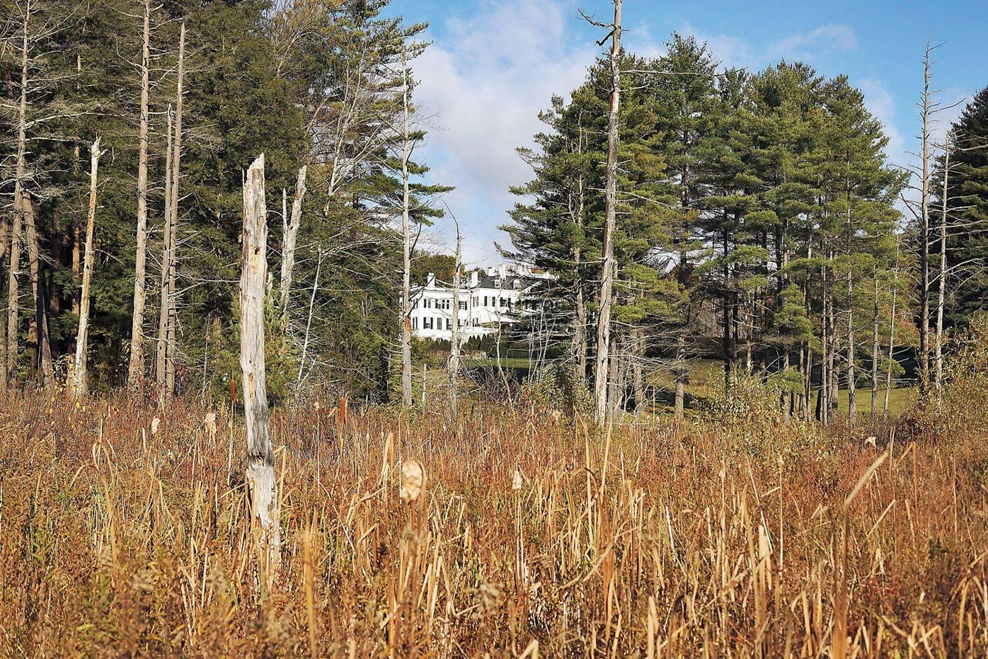 Deal struck to protect southern woodlands around The Mount