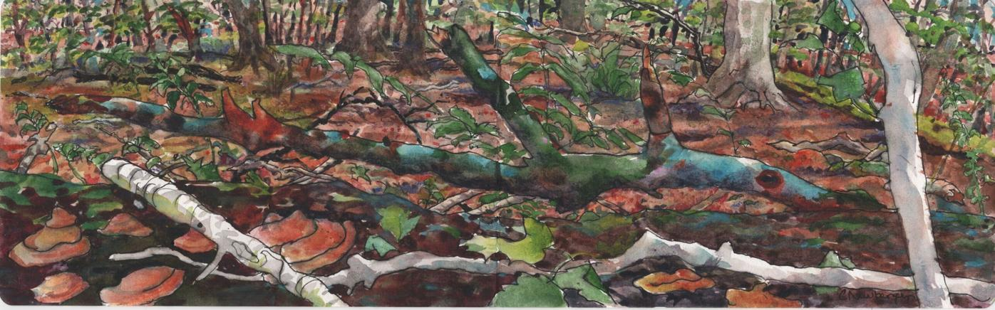 September Forest, watercolor