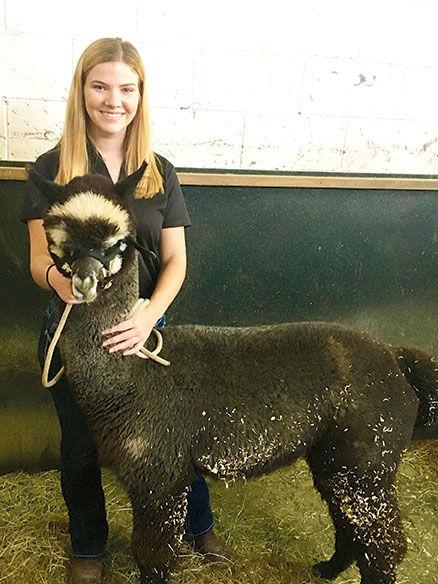 Alumna brings alpaca to Chicago Ag School | School News