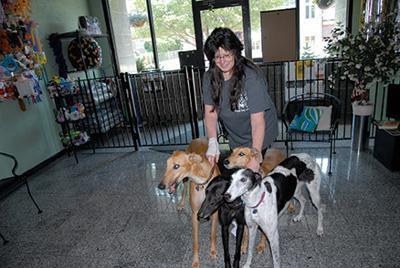 Posh Pet greyhounds