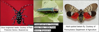 Washington Invasive Bugs