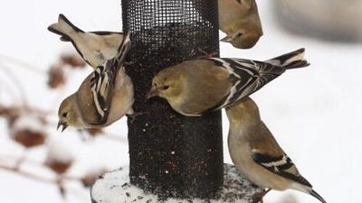 WDFW Bird Feeder