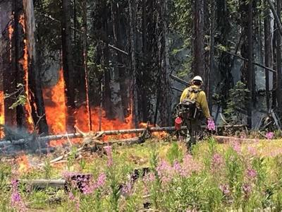 Dixie Fire Backburn