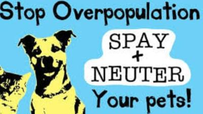 Helping Hands Rescue Spay + Neuter