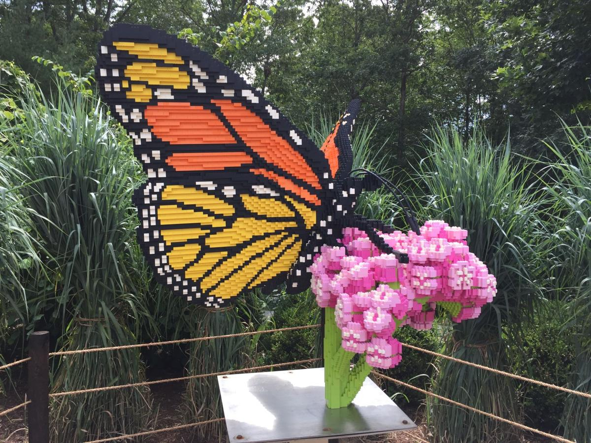 MonarchButterfly_NatureConnects