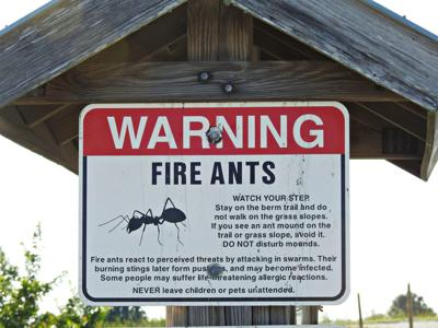 """""""Fire Ants"""" warning sign"""
