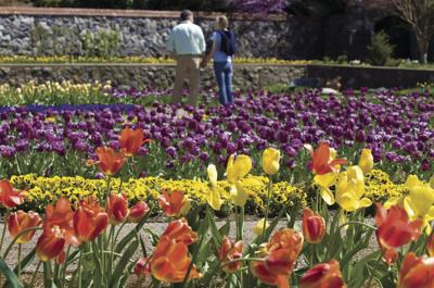 Biltmore Is In Bloom With Spring Flowers And Wedding Dresses Local News Biltmorebeacon Com