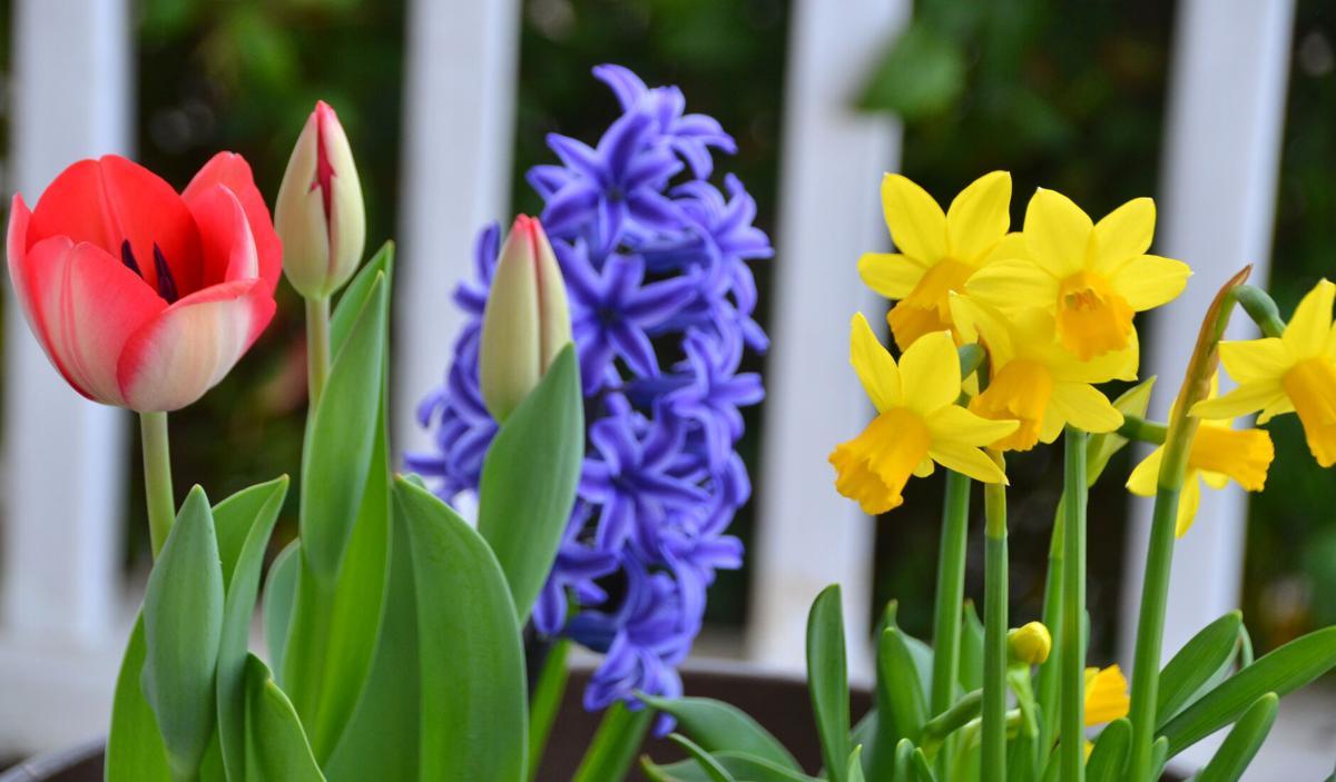 Multiple flowers in bloom