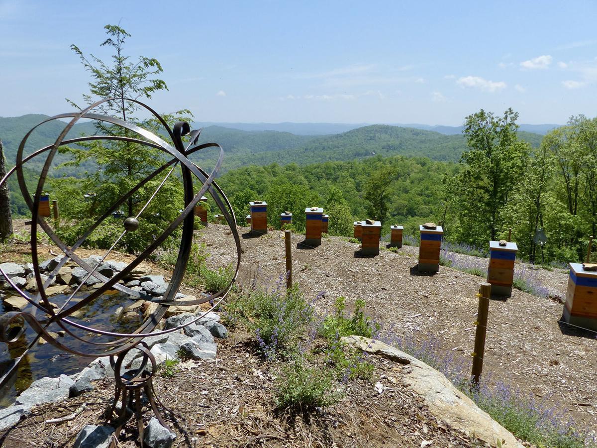 Killer Bees Honey Bee Farm mountain vista