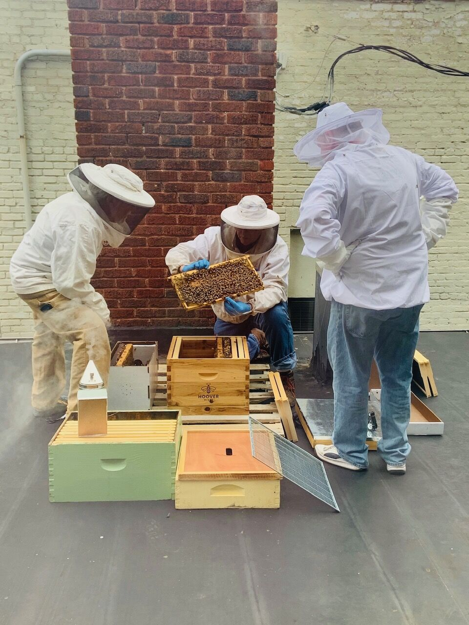 Bees on the roof.jpg