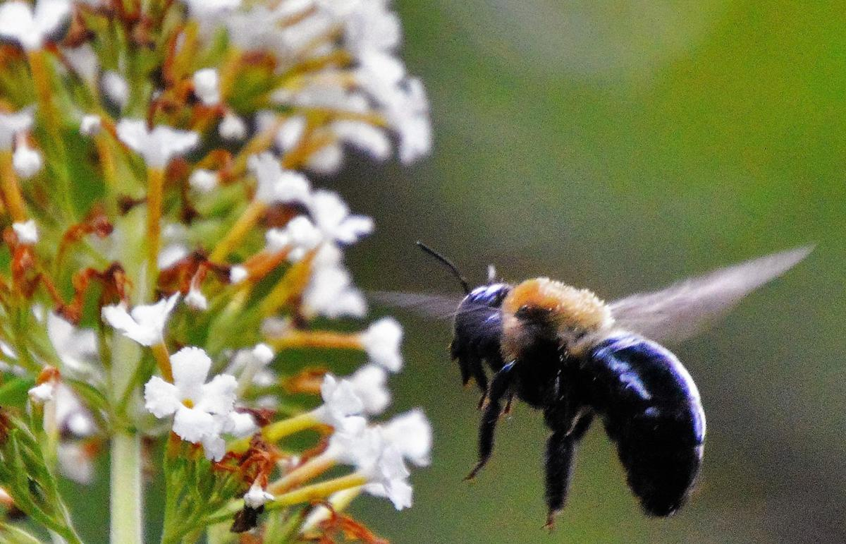 Protect the Pollinators, Support the Center for Honeybee Research