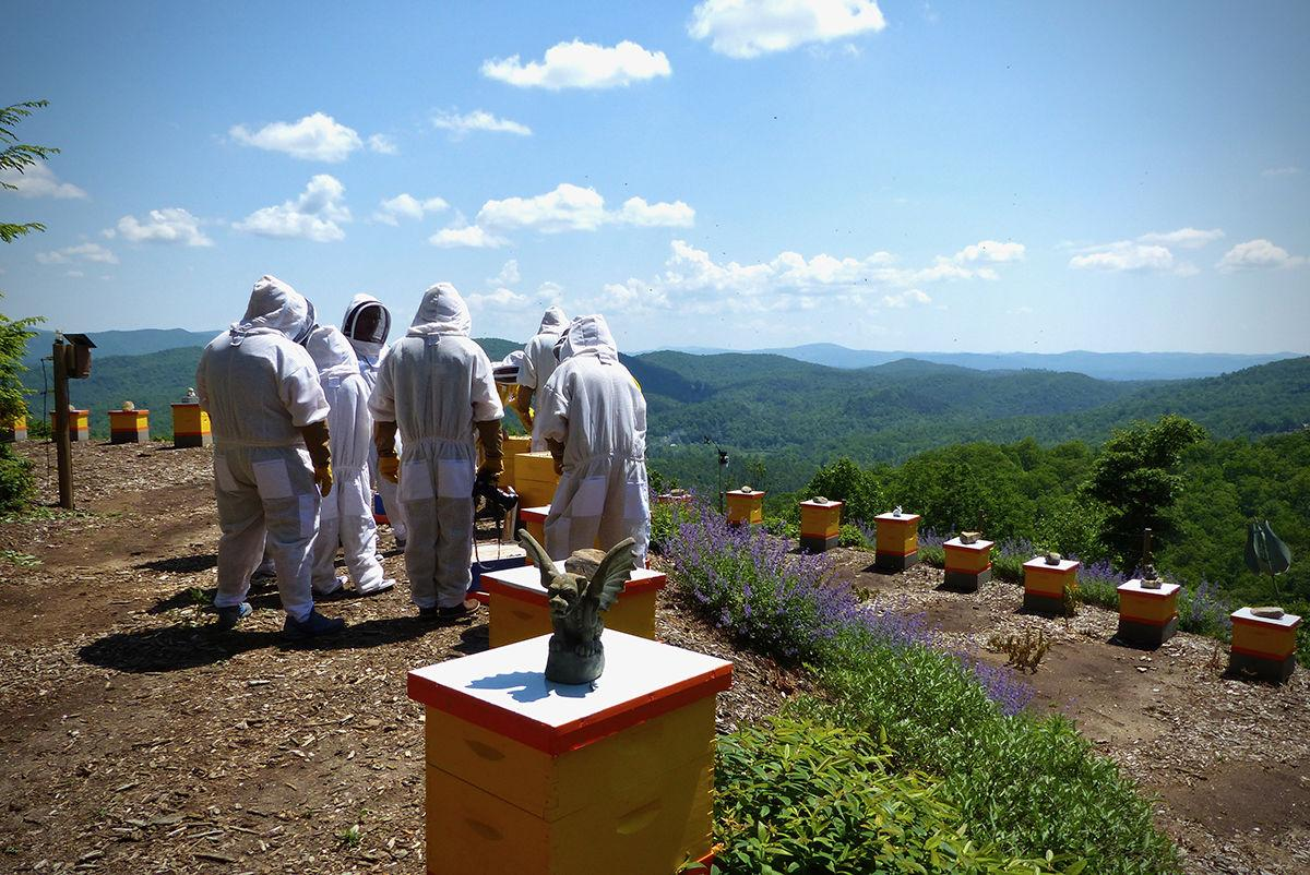 Mountaintop view of KBH tour group at hives