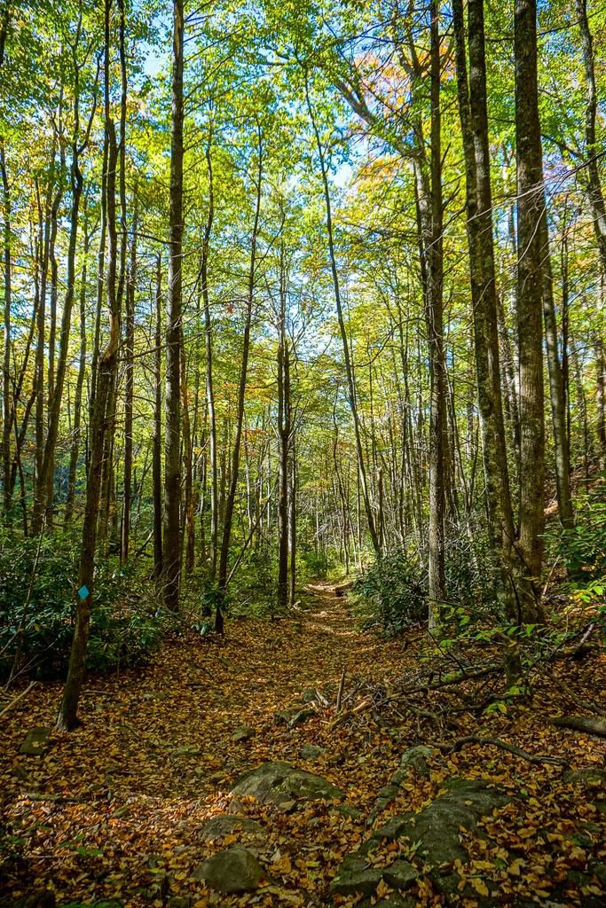 Graybeard Trail