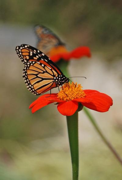 Plant a Pollinator Garden and Enjoy the Many Benefits