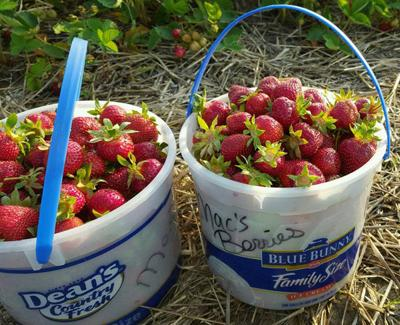 Two Options For Strawberry Picking Near Bloomer This Year
